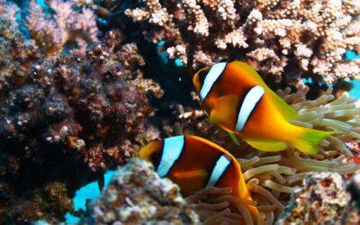 Egipt/Safari St.Johns 16 – 23 październik 2021 r.